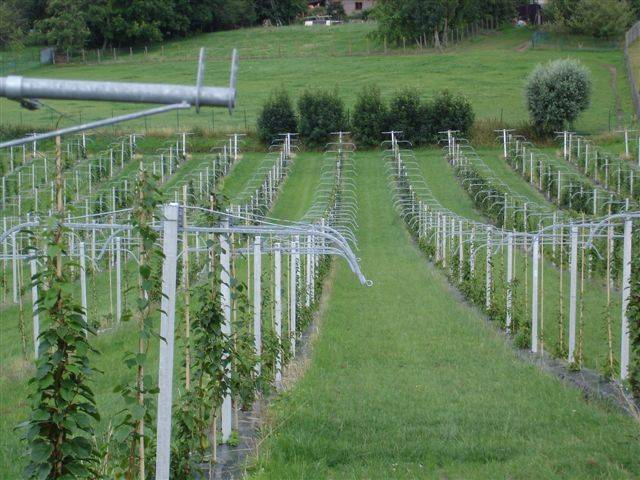 Klettergerüst Für Pflanzen : Mini kiwi.de
